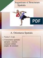 Orientare,Organizare Si Structurare Spatiala