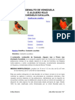 Cardenalito de Venezuela