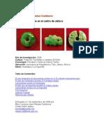 Las Piedras Verdes En El Centro De Jalisco..pdf
