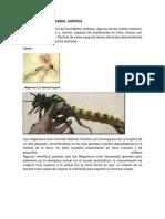 Animales Invertebrados Extintos