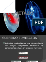EUMETAZOOA