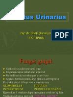 4. Tractus Urinarius
