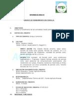 Inform Ensayo - Ag. Miranda