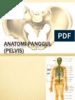 Anatomi Panggul (Pelvis) 1
