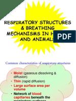 RespiratoryStructure&Breathingmechanisminhuman&Animal