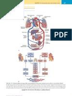 Chapter 010-Cardiovascular Dx