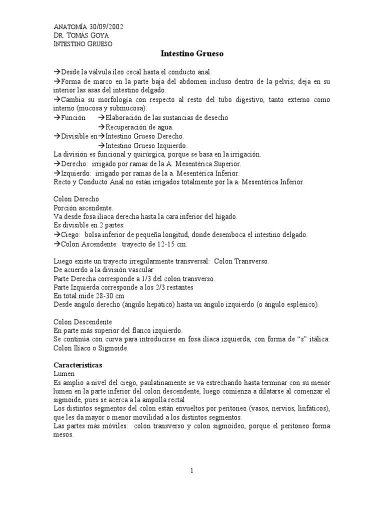Anatomía 09-30 Intestino Grueso