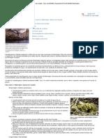 Gansos de Canadá - Viver com Wildlife _ Department of Fish & Wildlife Washington