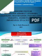 6ta Metabolismo Celular