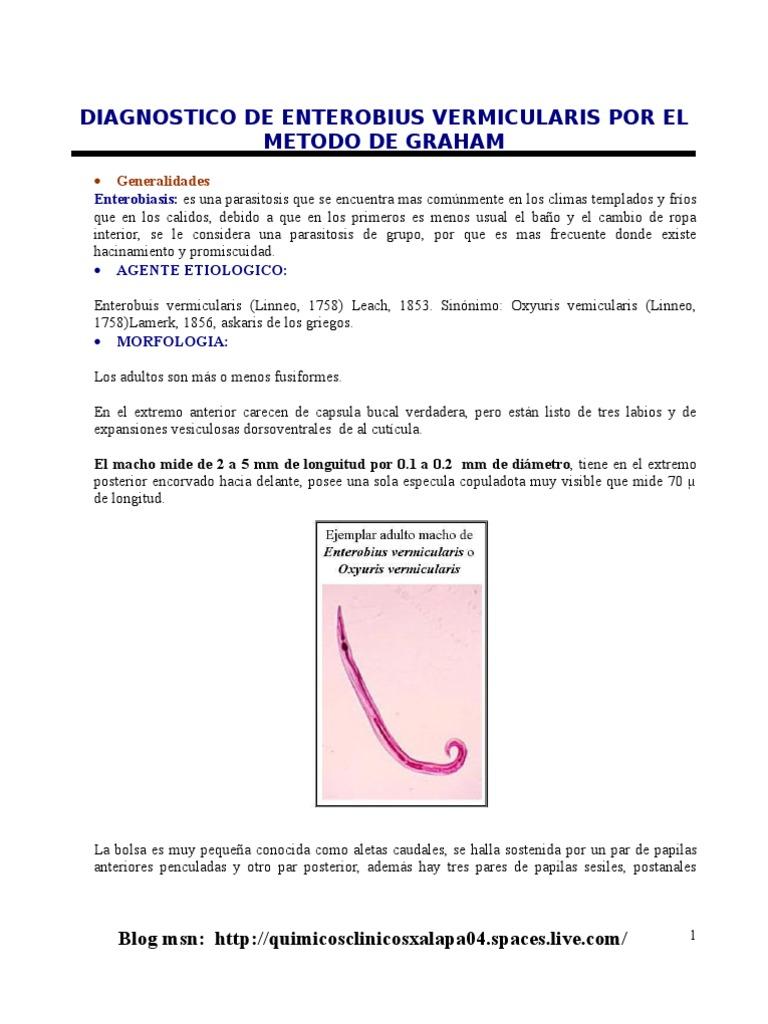 enterobiasis por enterobius vermicularis