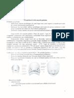 014 - Chirurgie OMF - Despicaturile Labio Maxilo Palatine