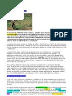 Definición de Población Rural