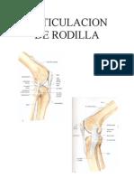 Articulacion de Rodilla