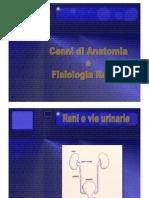 1 Lez. Cenni Di Anatomia e Fisiologia