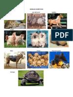 ANIMALES DOMÉSTICOS.docx