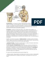 Fisiologia de Endocrino