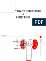 Urinary Tract Structure