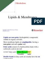 2 Lipid
