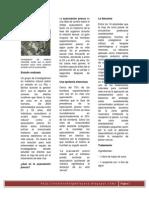 LA HOJA DE COCA UN REMEDIO CONTRA LA EYACULACIÓN PRECOZ - Nuestro blog de la Coca