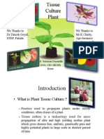 Tissue Plant Culture by Mr Solomon Dayanithi