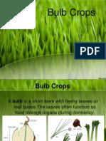 Bulb crops