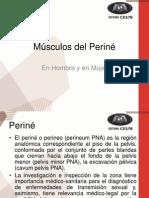 Músculos del Periné