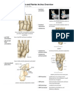 Foot Joints and Plantar Archesand