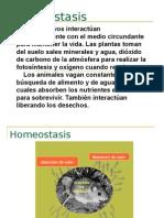 Homeostasis 02