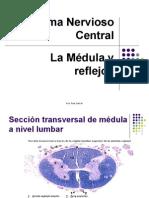 PP SNC Medula 13