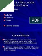 Regulacion cardiovascular 7