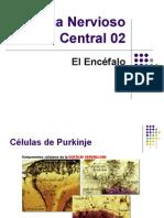 Sistema Nervioso Central 15
