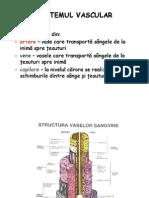 Sistemul Vascular - Artere