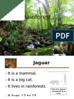 Power Point Patricia- Jaguar