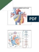 Autran Jr - Fisiologia Humana - Cardiovascular