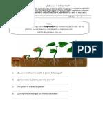 Guia de Ciencias Naturales Las Plantas