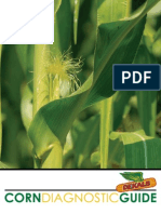 Corn Diagnostic Guide