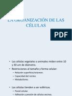 La Organizacion de Las Celulas