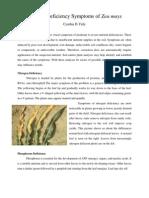Cynthia DF - 10504020111051 - Nutrisi Tanaman - Kelas A.pdf