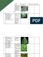 Tabel Botani Cryptogamae Pteridophyta