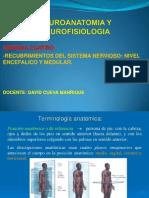 Semana 4-Recubrimientos Del Sistema Nervioso-Nivel Encefalico y Medular
