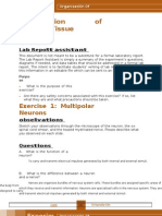 Lab 10- Organization of Nervous Tissue