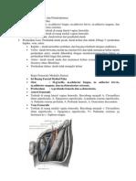 Anatomi Femur Dan Pendarahannya