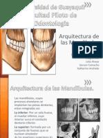 Arquitectura y Topografia Alveolodentaria (1)