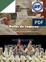 agroindustrial pollos1