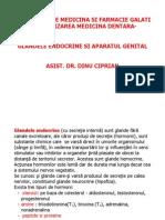 Glandele Endocrine Si AP Genital