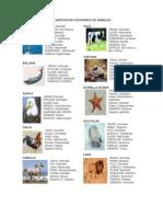 Clasificacion Taxonomica de Animales
