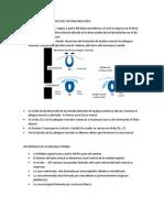 Resumen 3 Del Sistema Nervioso