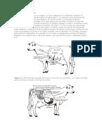 Estructura y Funcion