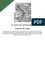 El Soto de Cantalobos, Cuaderno de Campo - C. Santo Domingo de Silos