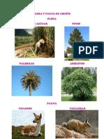 Flora y Fauna de Ascope